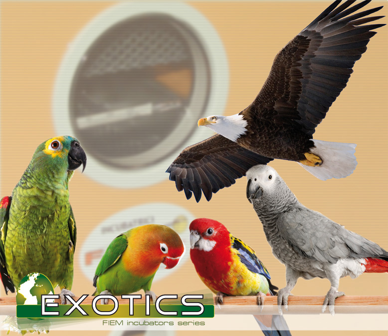 fiem-exotics-bird.jpg