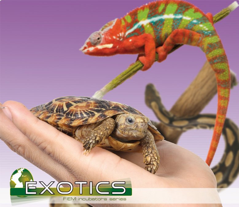 fiem-exotics-reptiles.jpg