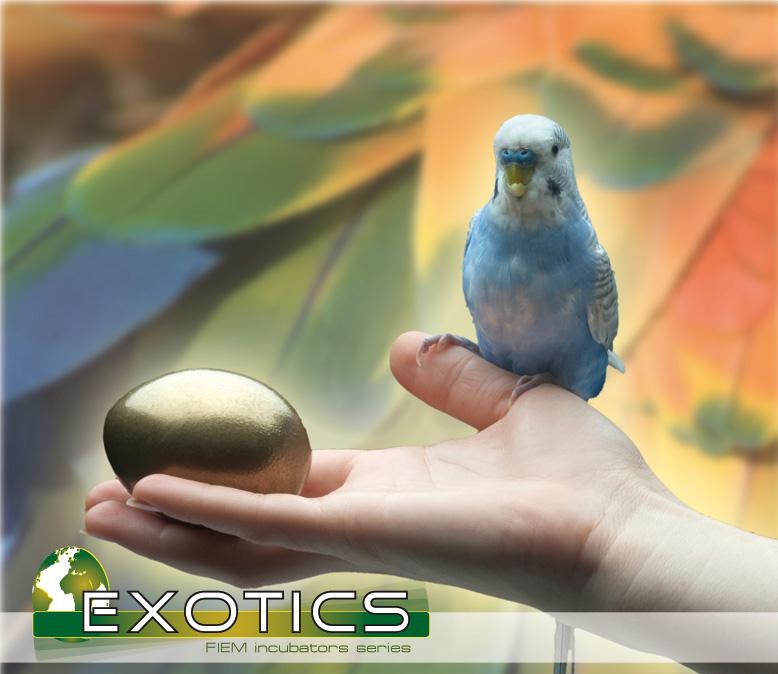 fiem-exotics.jpg